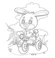 little bunny character rides a tricycle on a vector image vector image
