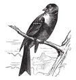 Ortolan bird vintage engraving vector image vector image