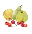 Watercolor painting of apples pear and cherries vector image