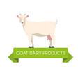 white swiss saanen goat side view isolated vector image vector image