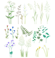 Grass and wild flowers vector image