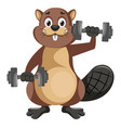 beaver with weights on white background vector image vector image