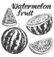 fruit watermelon hand drawn vector image vector image