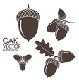 Oak Isolated acorns on white background vector image vector image