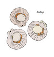 scallops vector image