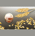 whiskey in glass and cereals grains vector image vector image