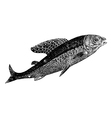 Arctic grayling vintage engraving vector image vector image