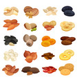 dried fruits nuts realistic set vector image