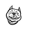 laughing boston terrier boston bull boston bull vector image vector image