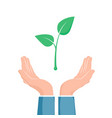 plant growth between two hands eco symbol cupped vector image vector image