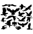predatory eagle or falcon hawk birds silhouettes vector image