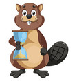 beaver with sand watch on white background vector image vector image