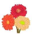 Bouquet of three colorful gerberas Hand drawn vector image vector image