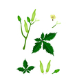 Parts of Okra Plant on White Background vector image vector image