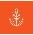 Wheat line icon vector image vector image