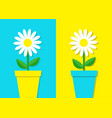 white daisy chamomile icon flower pot set cute vector image vector image
