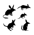 Bandicoot silhouettes vector image vector image