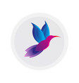 colorful hummingbird sign simple colibri logo vector image vector image