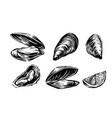 mussel set vector image