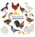 poultry farming chicken duck goose turkey pigeon vector image