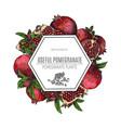 design of hand drawn pomegranate vintage vector image