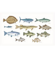 set of elegant drawings of fish isolated on white vector image