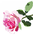 Delicate Pink Rose isolated vector image vector image
