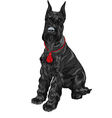 dog breed Giant Schnauzer color black vector image vector image