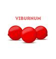 red berry botanical viburnum guelder rose vector image vector image