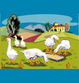 some geese eat from a manger vector image vector image