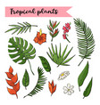 tropical plants setcollection isolated on a white vector image vector image