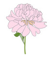 abstract hand drawn peony flower vector image