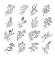 botanical sketch drawings of vector image