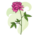 Floral pink peony card vector image
