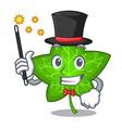 magician mascot cartoon beautiful ivy leaf plant vector image