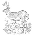 adult coloring bookpage a cute deer with big vector image