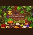 spices culinary herbs cooking herbal seasonings vector image vector image