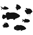 Different fish silhouettes vector image vector image