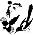 the black silhouette of a crow raven rook vector image