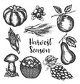 harvest vegetables hand drawn vector image