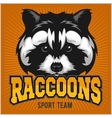 Raccoon head - sport emblem vector image