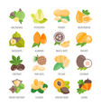 set icons nuts with names vector image
