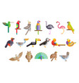 colorful set different birds pelican owl vector image