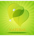 eco logo green leaves vector image