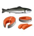 salmon fish realistic whole vector image vector image