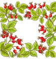 wild rose frame vector image vector image