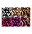 colorful zebra print vector image vector image
