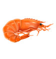 cooked shrimp realistic vector image vector image
