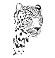 black and white portrait spoted leopard vector image vector image