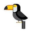 cartoon toucan isolated birds vector image vector image